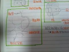 岡 梨紗子 公式ブログ/絵心ちゃん(´・ω・`) 画像2