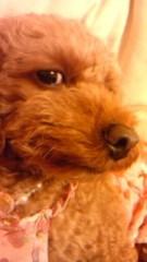 岡 梨紗子 公式ブログ/おるすばん 画像3