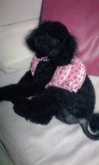 岡 梨紗子 公式ブログ/真っ黒くろすけ 画像1