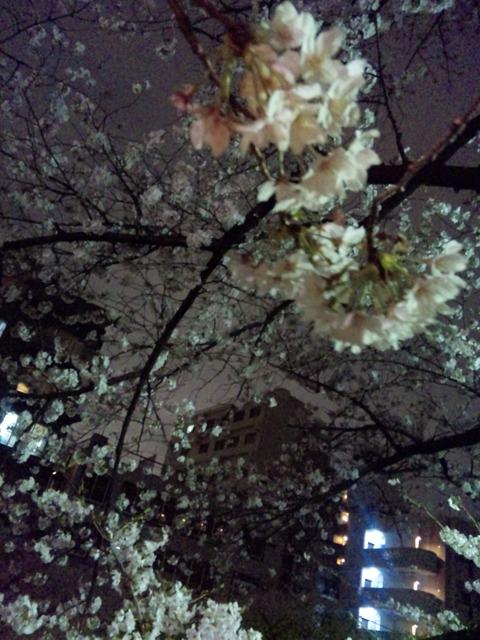 13.03.23 夜桜