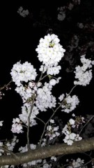 山咲トオル 公式ブログ/(о´∀`о)うっとり。はんなり。 画像3