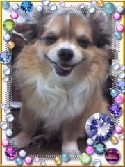 コジちゃん(ムシャムシャ) 公式ブログ/笑う犬 画像1