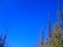 YUKA 公式ブログ/神宮外苑いちょう祭り〜表参道X'MASイルミネーション 画像2