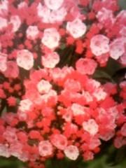 YUKA 公式ブログ/お華ブログ〜vol.6〜 画像1