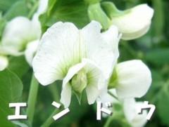 小川将且 公式ブログ/ムスカリ� 画像1