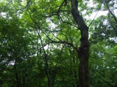 神長アイリーンミシェル 公式ブログ/バーベキュー 画像2