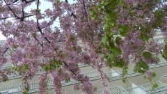 羽野晶紀 公式ブログ/お久しぶりですぅ 画像1