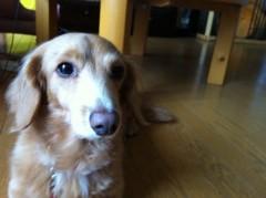 TAKATO 公式ブログ/犬 画像1