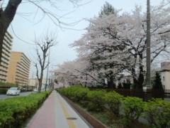 五十嵐 康平 プライベート画像 桜