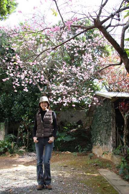 IMG_4941桜t