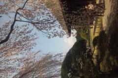 UNA(ナナカラット) 公式ブログ/桜ふぶき〜の中でライブ 画像1