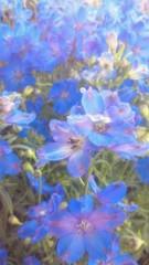 河合エミ 公式ブログ/私の大好きなお花 画像1