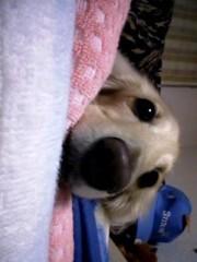 かおりん 公式ブログ/愛犬 画像1