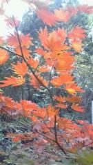 阪田瑞穂 公式ブログ/紅葉 画像1
