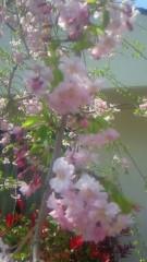 夏秋佳代子 公式ブログ/春日和(^O^) / 画像1