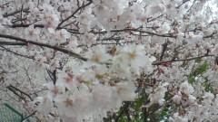 夏秋佳代子 公式ブログ/お久しぶりです☆ 画像1