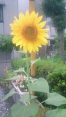 夏秋佳代子 公式ブログ/スタンプは… 画像1