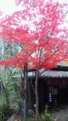 夏秋佳代子 公式ブログ/☆紅葉真っ盛り☆ 画像3