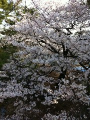 夏秋佳代子 公式ブログ/☆桜前線☆ 画像2