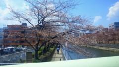 夏秋佳代子 公式ブログ/☆桜前線☆ 画像1