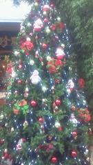 夏秋佳代子 プライベート画像/夏秋佳代子の2009年クリスマス☆ 中華街ツリー