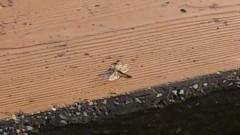 川井つと 公式ブログ/小さい秋見つけた 画像2