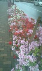 川井つと 公式ブログ/花が続きます 画像1