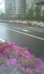川井つと 公式ブログ/花が続きます 画像2
