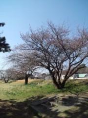 川井つと 公式ブログ/さくら開花宣言 画像1