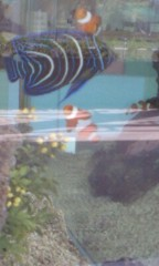川井つと 公式ブログ/カクレクマノミ 画像1