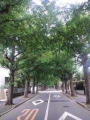 川井つと 公式ブログ/銀杏並木 画像1