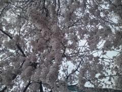 飯塚美智子 公式ブログ/2011-04-09 11:17:15 画像1