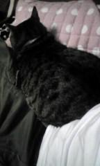 末永大樹 公式ブログ/ネコは 画像1