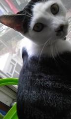 末永大樹 公式ブログ/おとうと猫 画像1