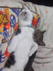 末永大樹 公式ブログ/みんなと日差しとネコと 画像1