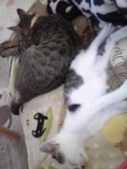 末永大樹 公式ブログ/今日のネコら 画像1
