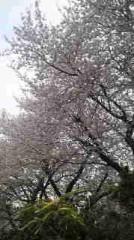 小松菜都 公式ブログ/桜 画像1