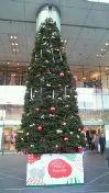 小松菜都 公式ブログ/(◎^ω^){ クリスマス…】 画像1