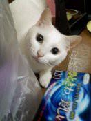 西原純 公式ブログ/ミルキ〜〜〜ネコのなまえ〜〜〜 画像1