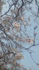 木野園子 公式ブログ/桜 画像1