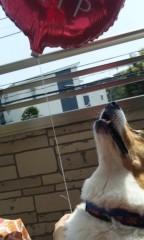 野原みのり 公式ブログ/風船落ちてた! 画像1