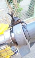野原みのり 公式ブログ/カブトムシ発見! 画像1