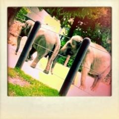 野原みのり 公式ブログ/上野動物園のかわいすぎなゾウ!! 画像1
