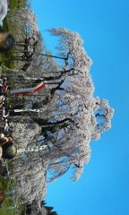 雨野美咲 プライベート画像 三春の滝桜!