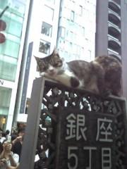 車田つかさ 公式ブログ/にゃんこ♪ 画像2