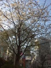 小林梨沙 公式ブログ/私とレイカと桜とメガネ。 画像2