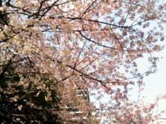 奥山あゆみ 公式ブログ/桜♪ 画像1