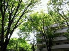 奥山あゆみ 公式ブログ/木漏れ日(*´▽`*) 画像1