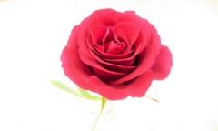 奥山あゆみ 公式ブログ/花のパワー 画像1