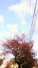 奥山あゆみ 公式ブログ/紅葉と空 画像1